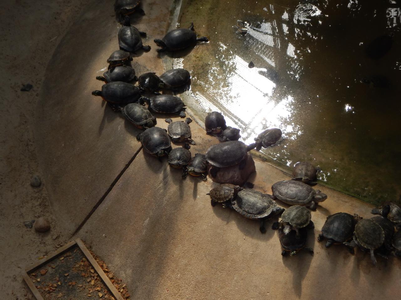 Tierpark Berlin Schildkröte